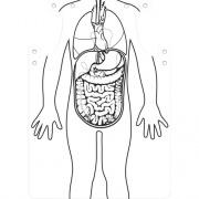 Roylco Organs Aprons (59802)
